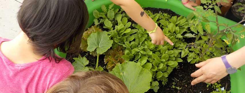 Bacs à plantes aromatiques Eco-Schools